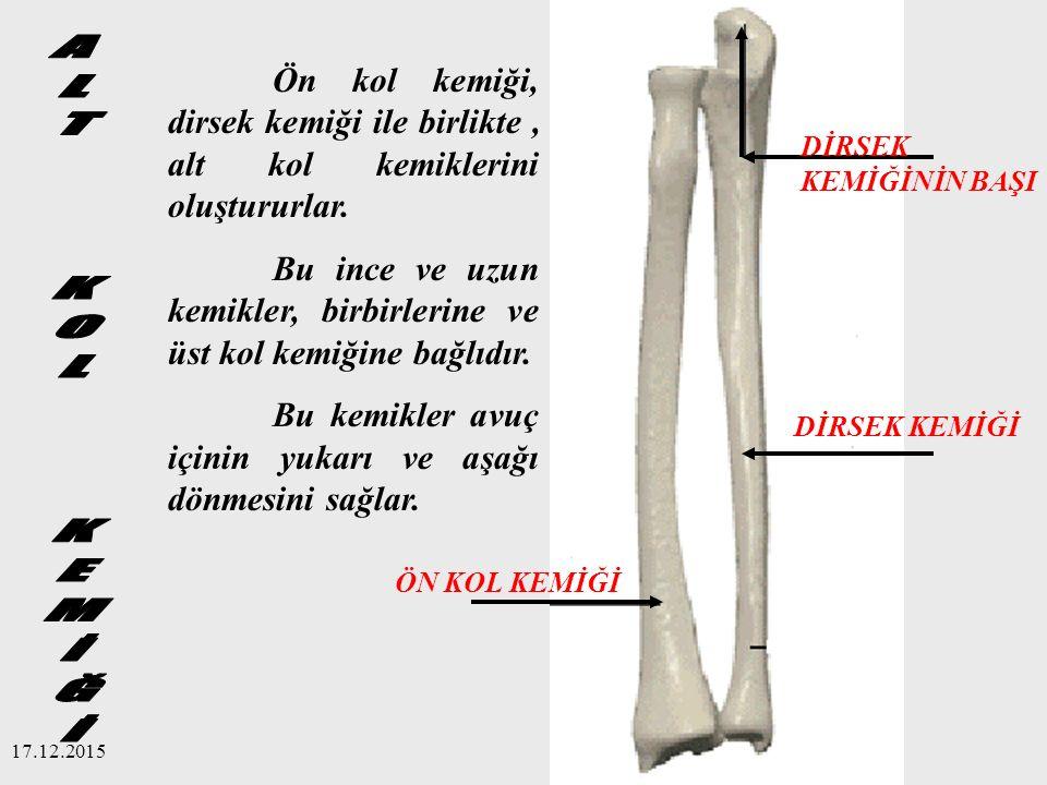 Ön kol kemiği, dirsek kemiği ile birlikte , alt kol kemiklerini oluştururlar.