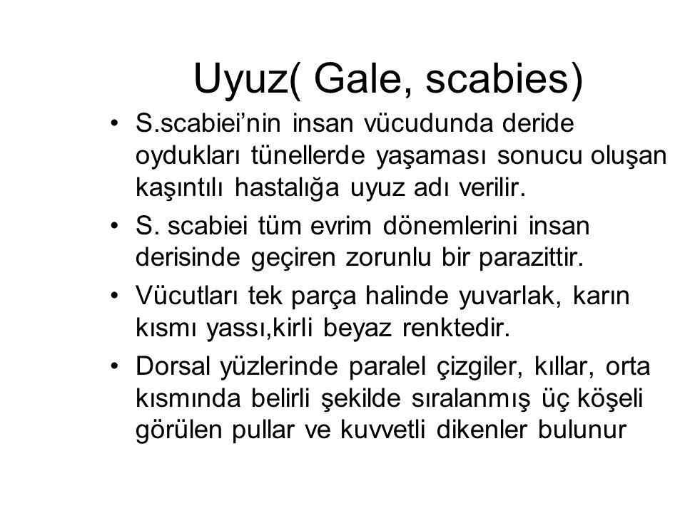 Uyuz( Gale, scabies) S.scabiei'nin insan vücudunda deride oydukları tünellerde yaşaması sonucu oluşan kaşıntılı hastalığa uyuz adı verilir.