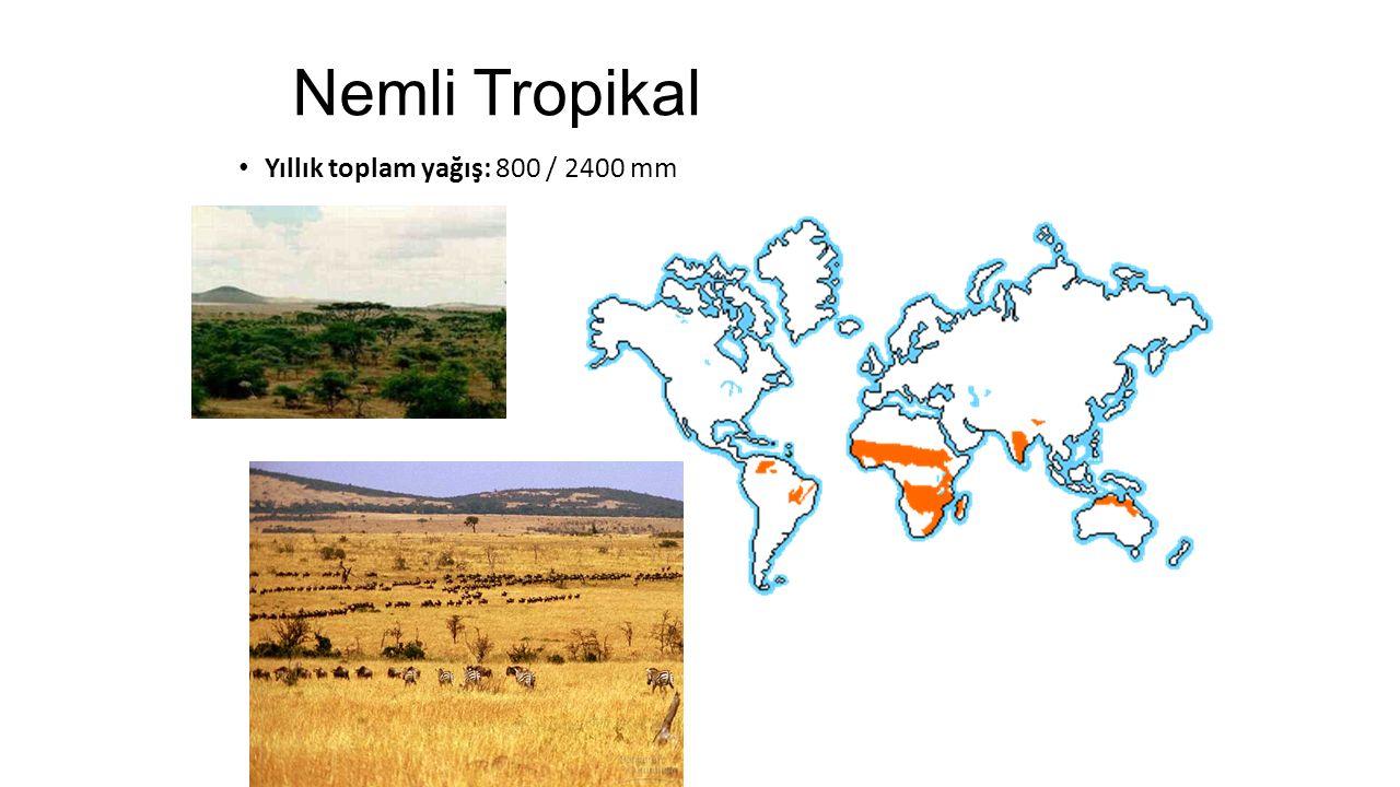 Nemli Tropikal Yıllık toplam yağış: 800 / 2400 mm
