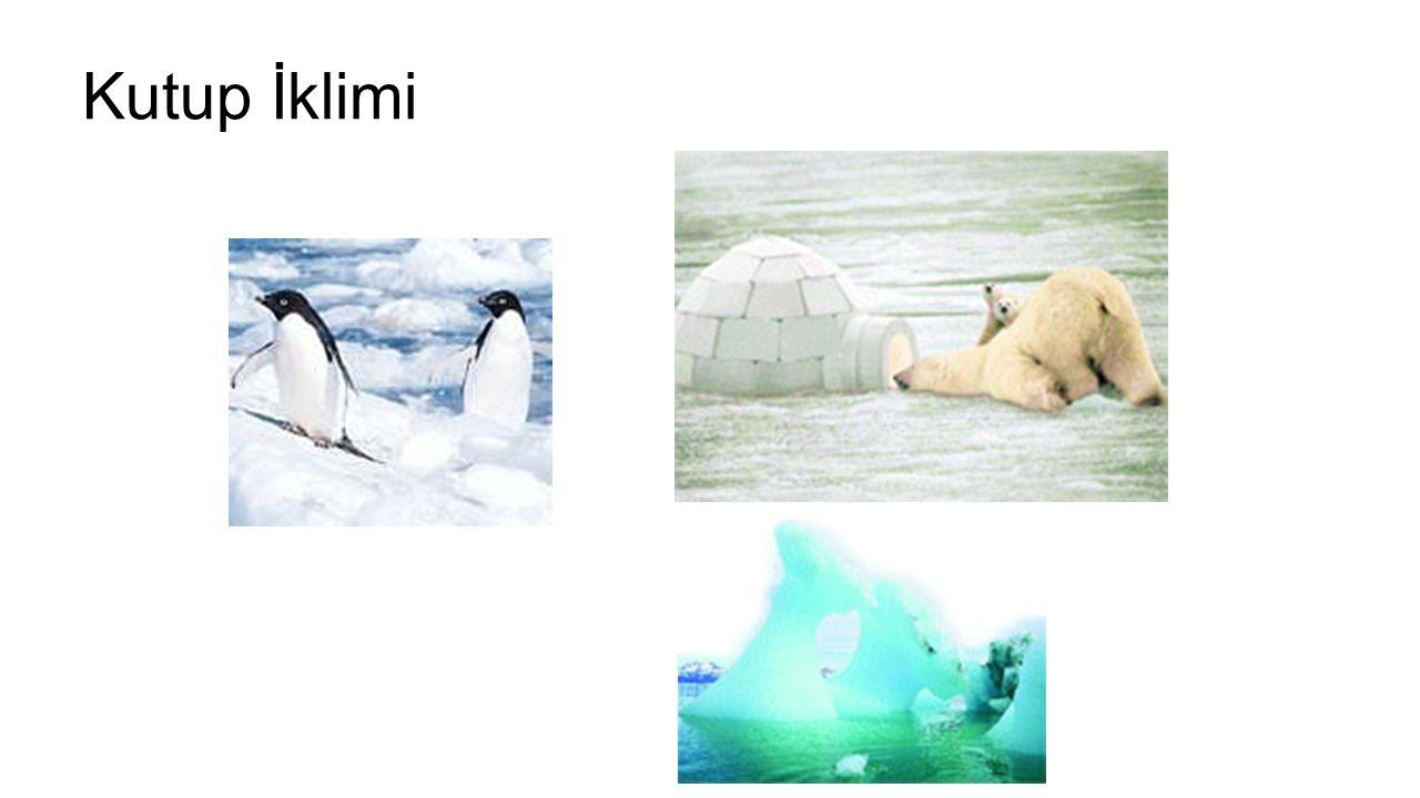 Kutup İklimi