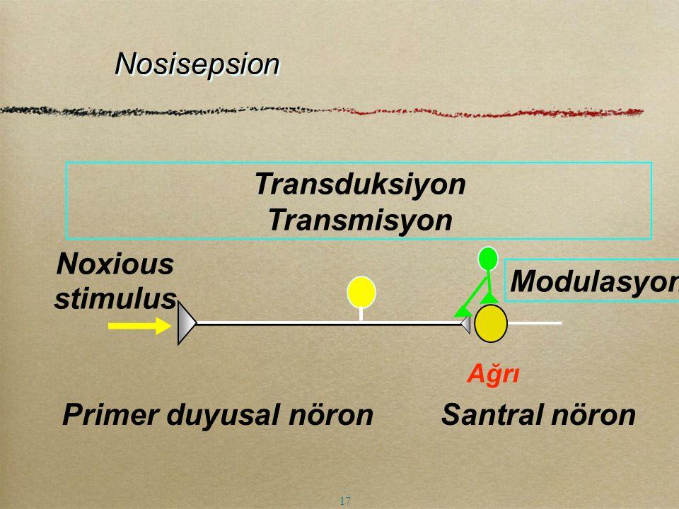 Transduksiyon Transmisyon Primer duyusal nöron Santral nöron