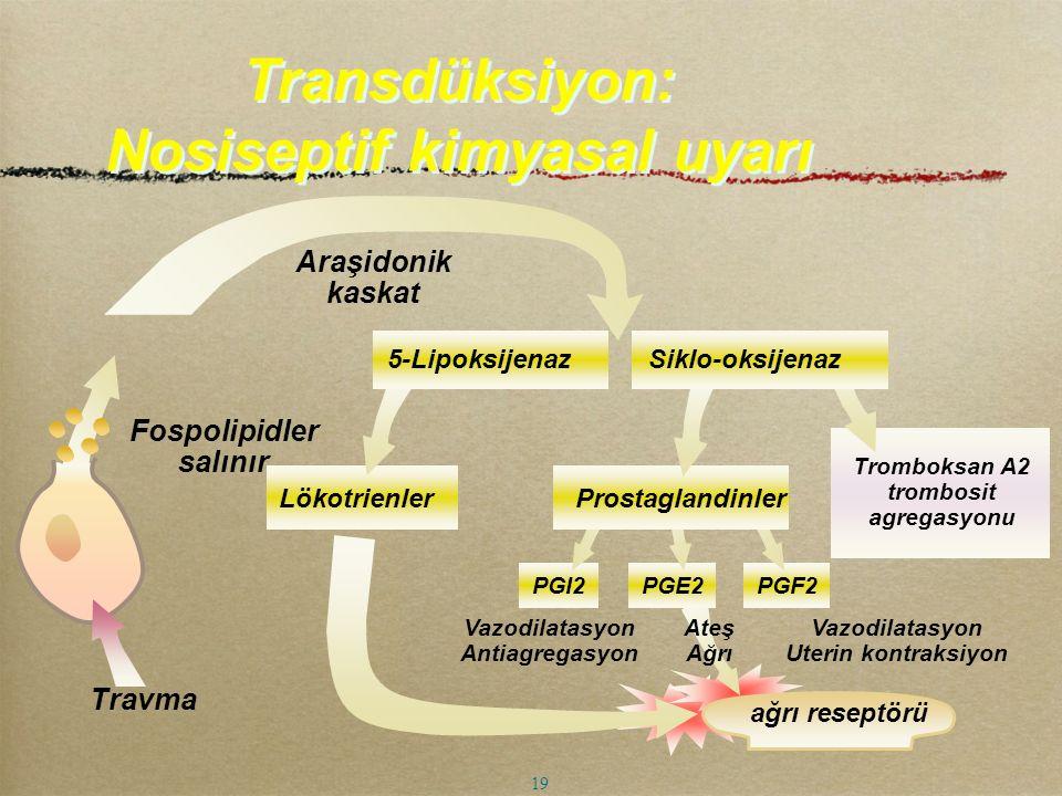 Transdüksiyon: Nosiseptif kimyasal uyarı
