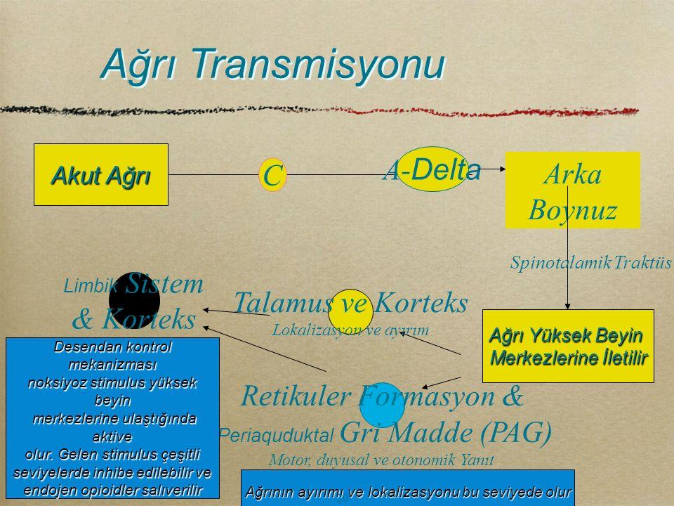 Ağrı Transmisyonu A-Delta C Arka Boynuz & Korteks Talamus ve Korteks
