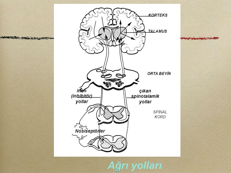 Ağrı yolları inen çıkan (inhibitör) spinotalamik yollar Nosiseptörler