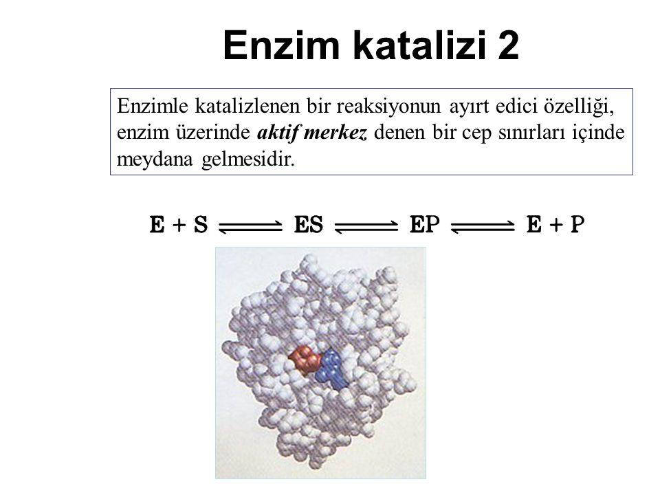 Enzim katalizi 2