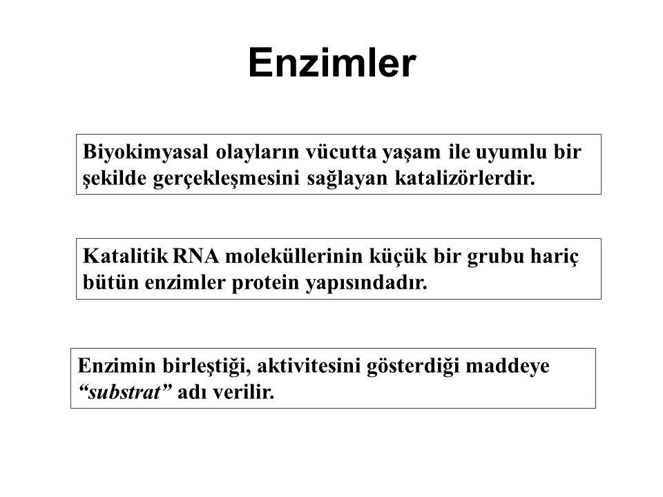 Enzimler Biyokimyasal olayların vücutta yaşam ile uyumlu bir şekilde gerçekleşmesini sağlayan katalizörlerdir.