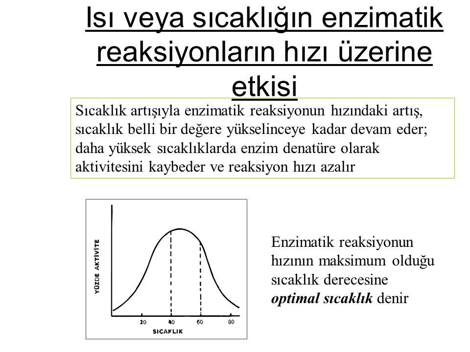 Isı veya sıcaklığın enzimatik reaksiyonların hızı üzerine etkisi