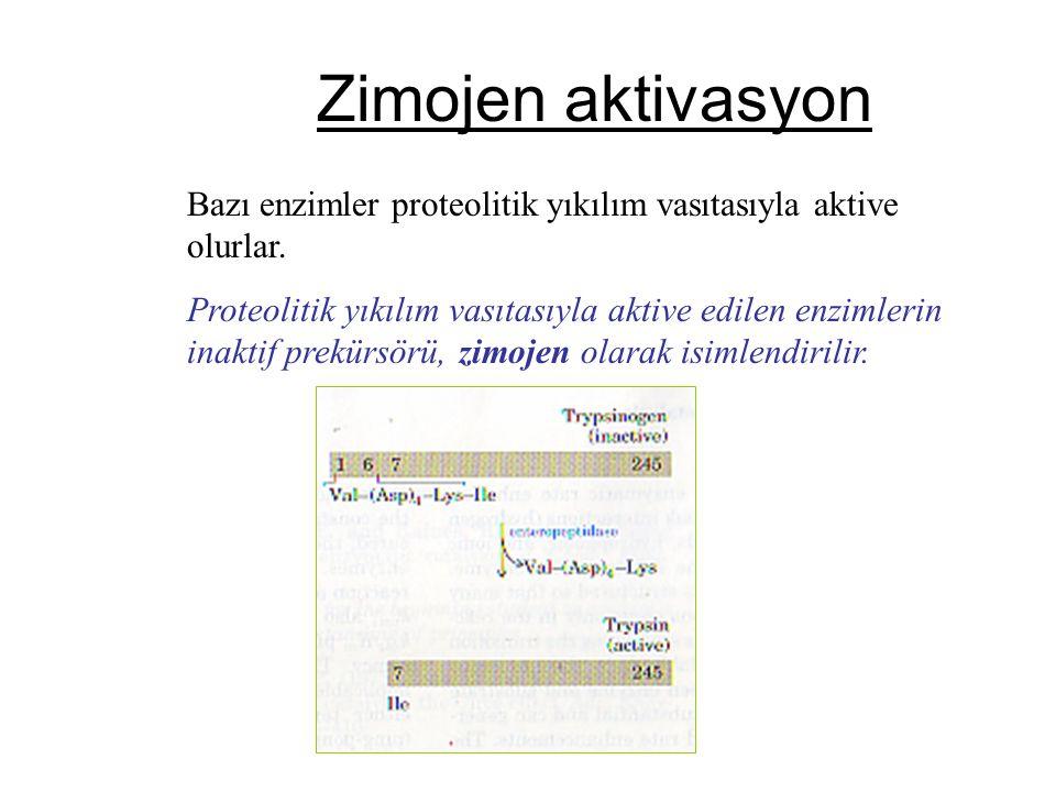 Zimojen aktivasyon Bazı enzimler proteolitik yıkılım vasıtasıyla aktive olurlar.