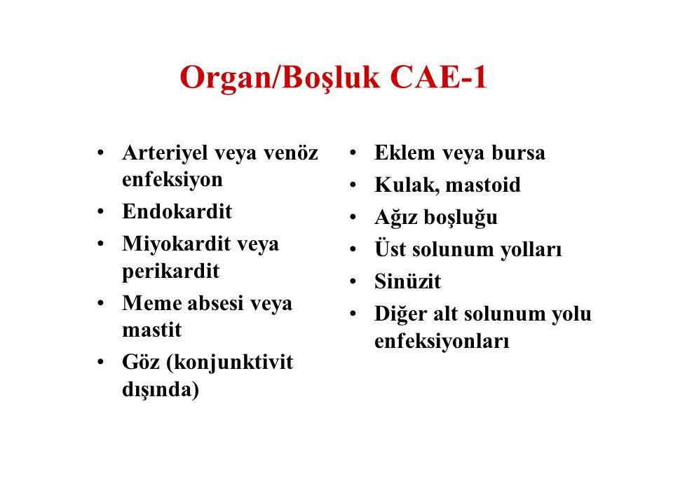 Organ/Boşluk CAE-1 Arteriyel veya venöz enfeksiyon Endokardit