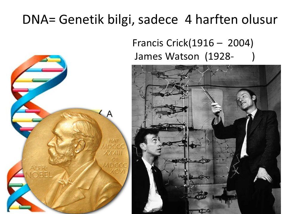 DNA= Genetik bilgi, sadece 4 harften olusur