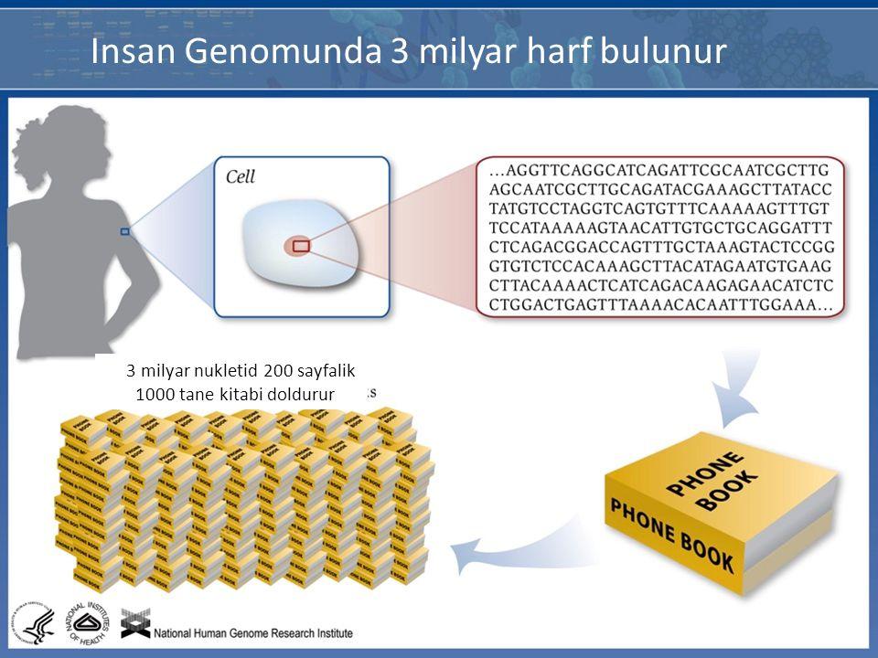 3M baz cifti Insan Genomunda 3 milyar harf bulunur