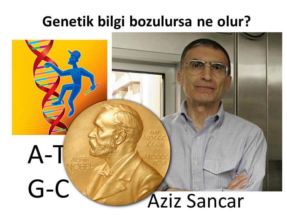 Genetik bilgi bozulursa ne olur