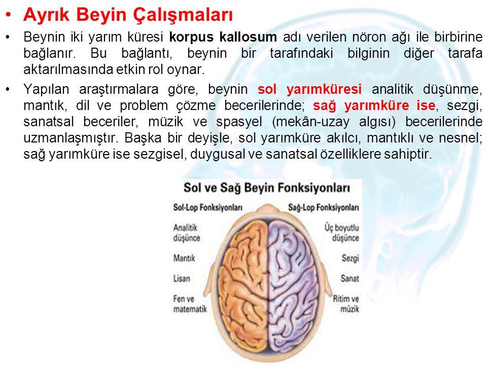 Ayrık Beyin Çalışmaları