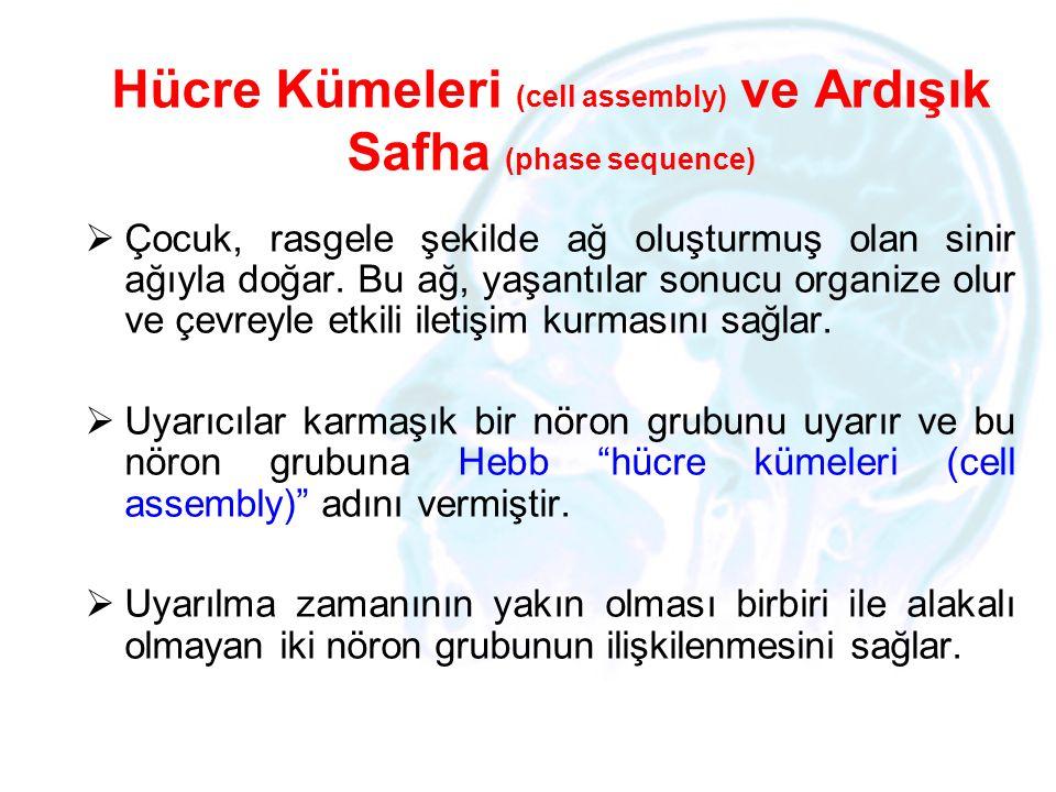 Hücre Kümeleri (cell assembly) ve Ardışık Safha (phase sequence)