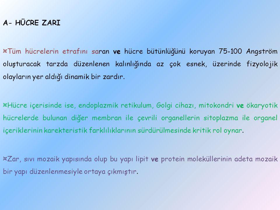 A- HÜCRE ZARI