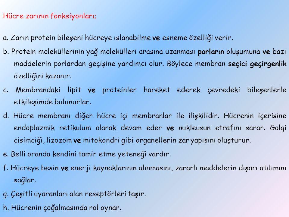 Hücre zarının fonksiyonları; a