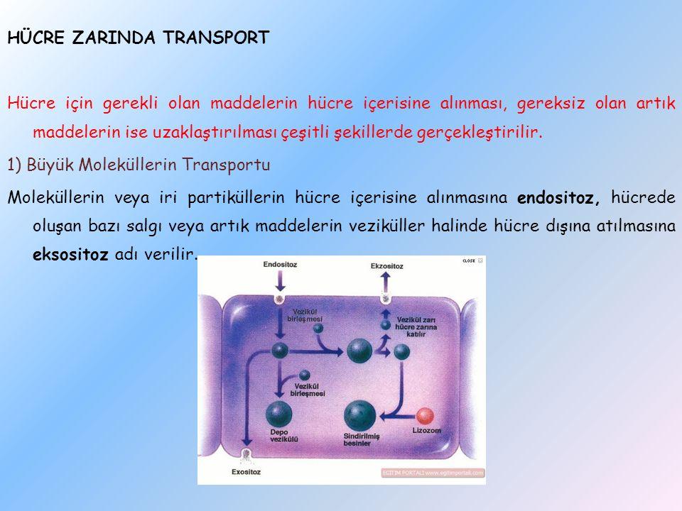 HÜCRE ZARINDA TRANSPORT Hücre için gerekli olan maddelerin hücre içerisine alınması, gereksiz olan artık maddelerin ise uzaklaştırılması çeşitli şekillerde gerçekleştirilir.