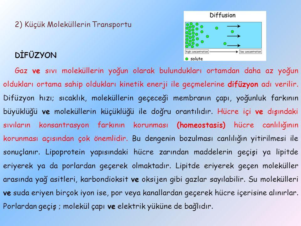 2) Küçük Moleküllerin Transportu DİFÜZYON Gaz ve sıvı moleküllerin yoğun olarak bulundukları ortamdan daha az yoğun oldukları ortama sahip oldukları kinetik enerji ile geçmelerine difüzyon adı verilir.