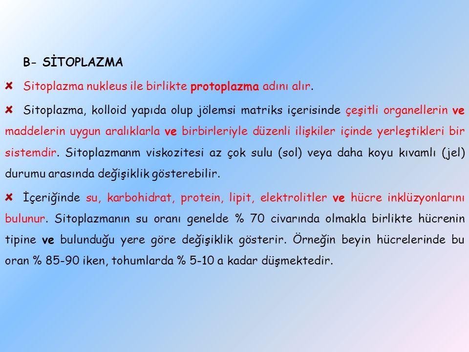 B- SİTOPLAZMA Sitoplazma nukleus ile birlikte protoplazma adını alır.