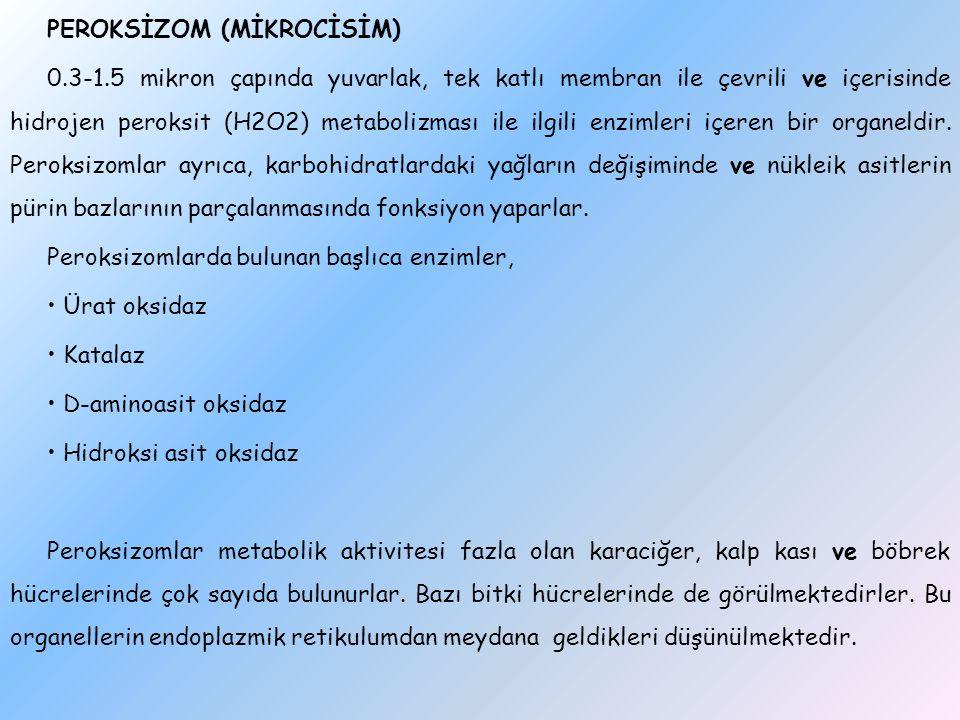 PEROKSİZOM (MİKROCİSİM) 0. 3-1