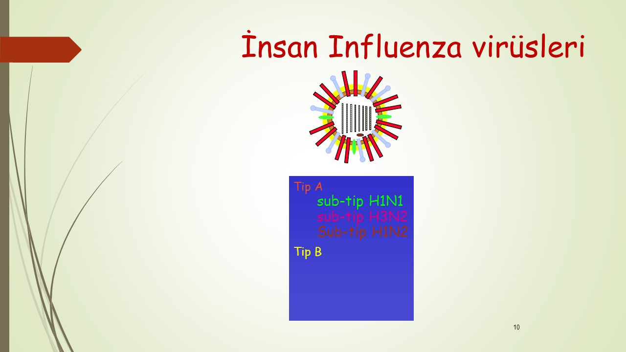 İnsan Influenza virüsleri
