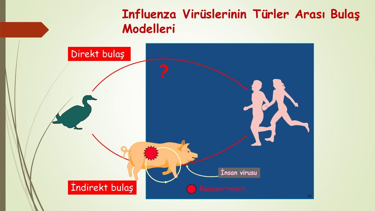 Influenza Virüslerinin Türler Arası Bulaş Modelleri