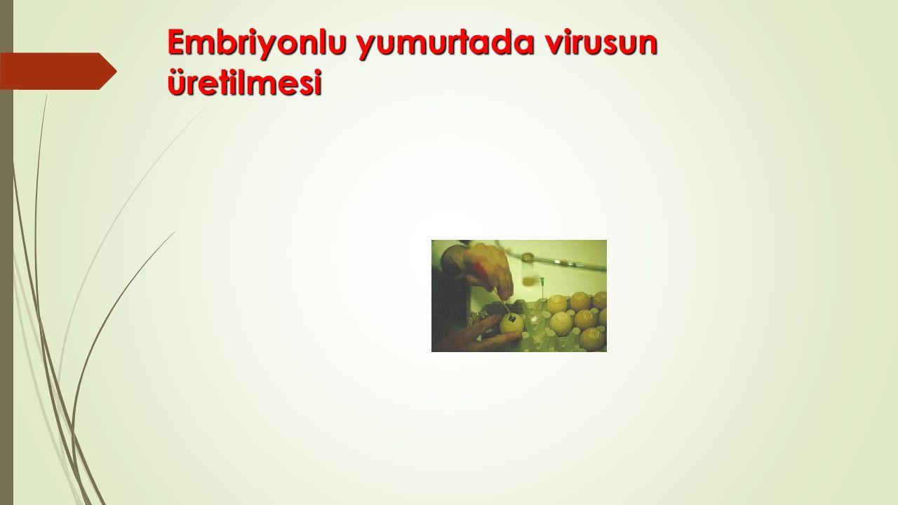 Embriyonlu yumurtada virusun üretilmesi