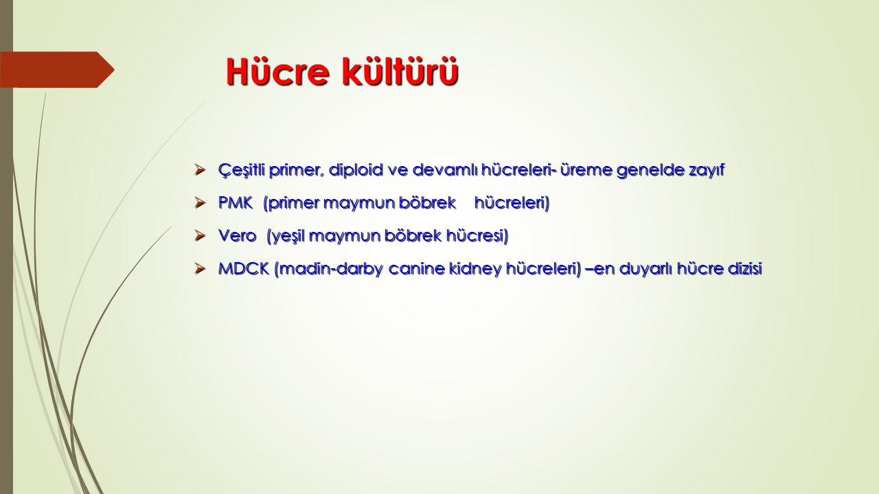 Hücre kültürü Çeşitli primer, diploid ve devamlı hücreleri- üreme genelde zayıf. PMK (primer maymun böbrek hücreleri)