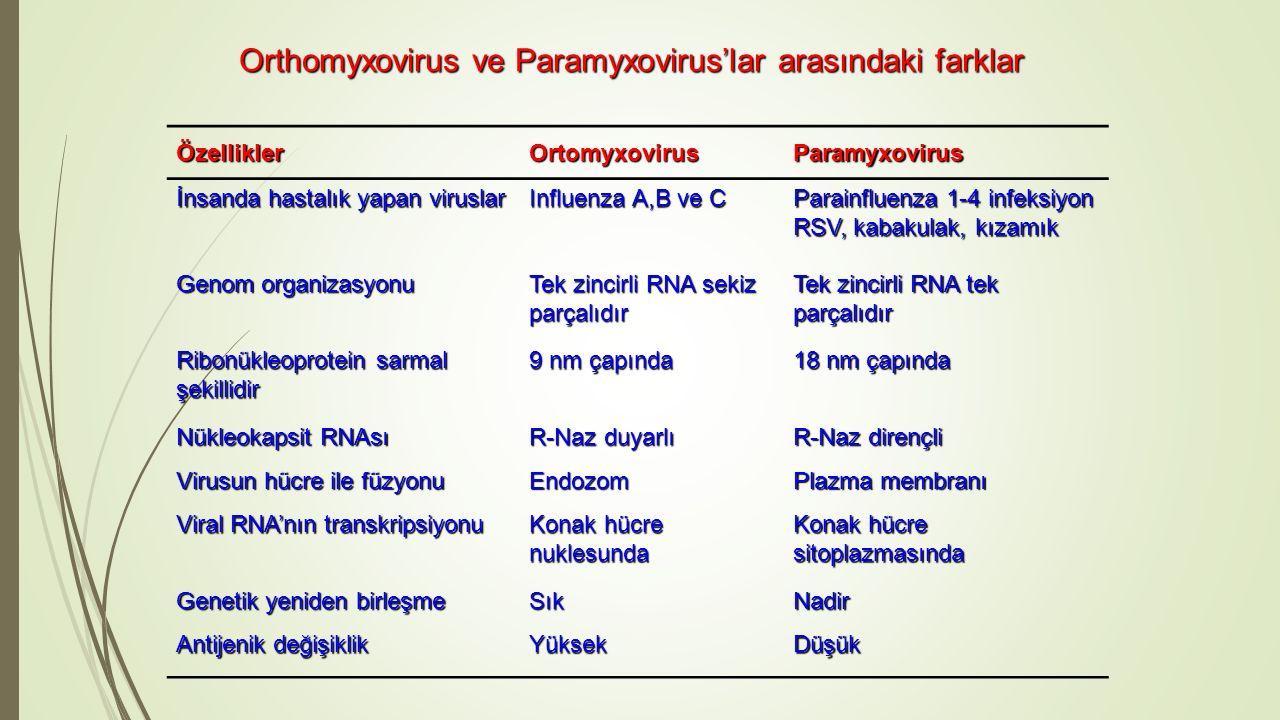 Orthomyxovirus ve Paramyxovirus'lar arasındaki farklar
