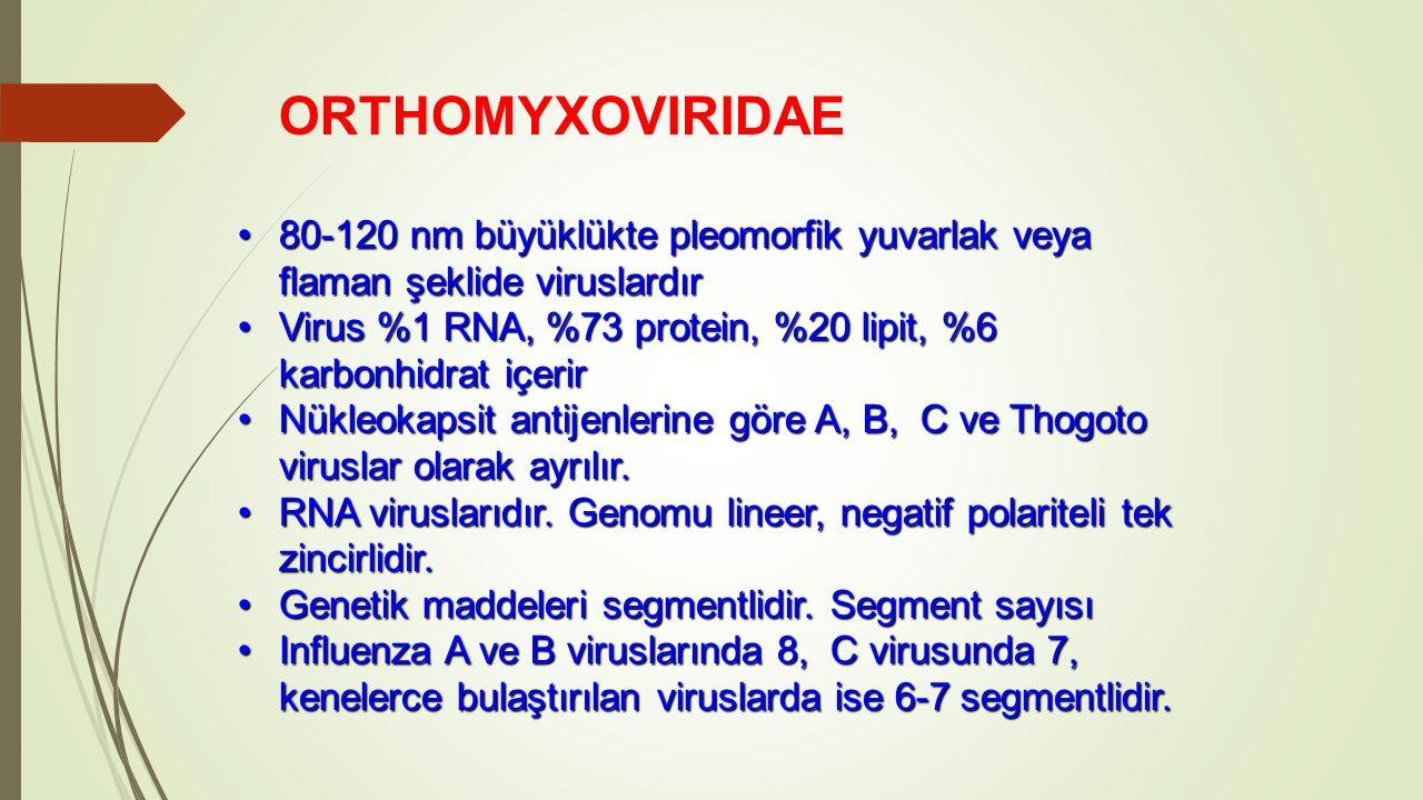 ORTHOMYXOVIRIDAE 80-120 nm büyüklükte pleomorfik yuvarlak veya flaman şeklide viruslardır.