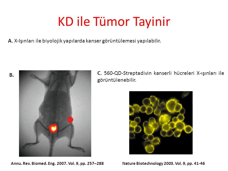 KD ile Tümor Tayinir A. X-Işınları ile biyolojik yapılarda kanser görüntülemesi yapılabilir.