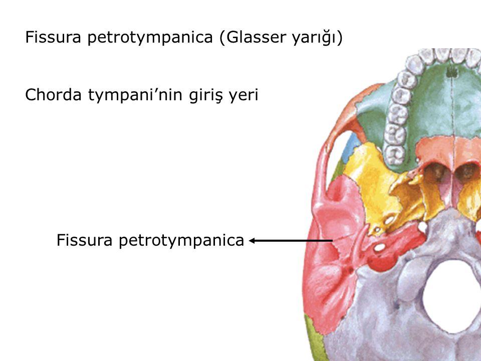 Fissura petrotympanica (Glasser yarığı)