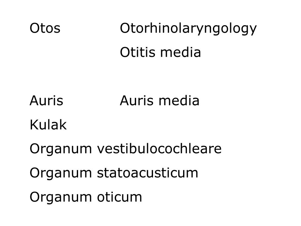 Otos Otorhinolaryngology