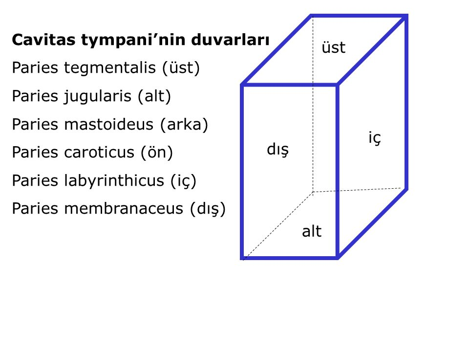 Cavitas tympani'nin duvarları