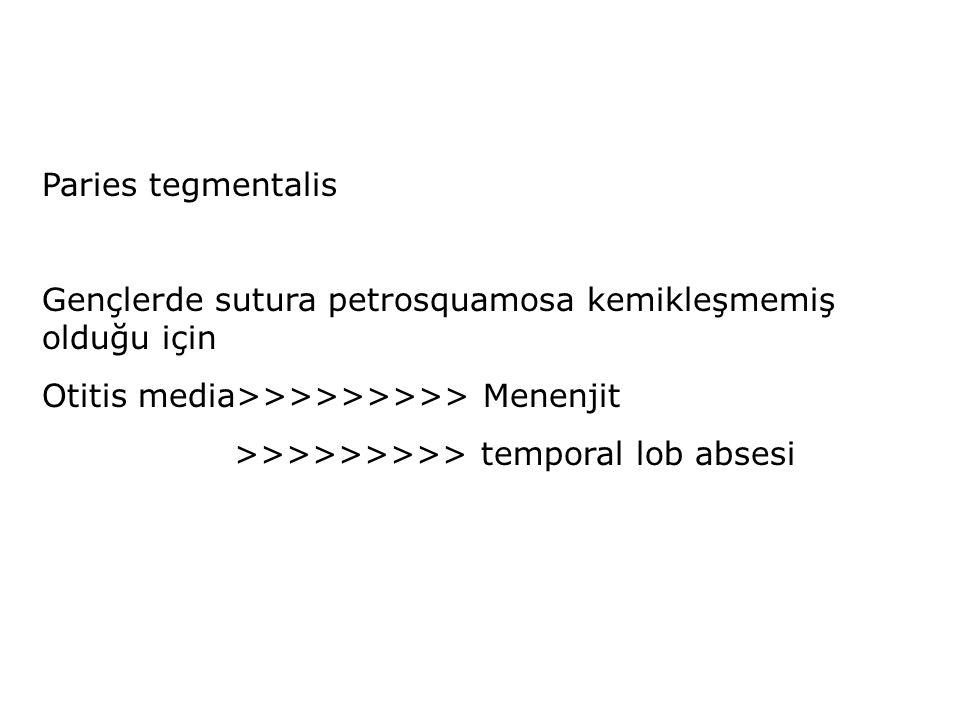 Paries tegmentalis Gençlerde sutura petrosquamosa kemikleşmemiş olduğu için. Otitis media>>>>>>>>> Menenjit.