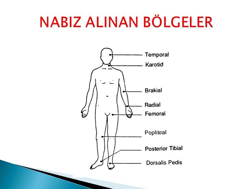 NABIZ ALINAN BÖLGELER
