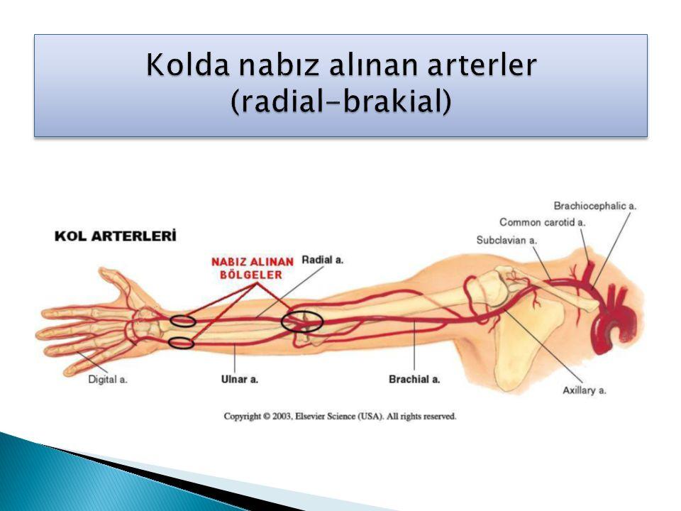 Kolda nabız alınan arterler (radial-brakial)