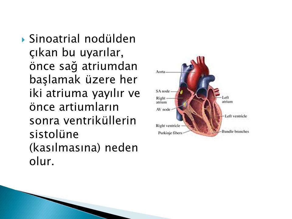 Sinoatrial nodülden çıkan bu uyarılar, önce sağ atriumdan başlamak üzere her iki atriuma yayılır ve önce artiumların sonra ventriküllerin sistolüne (kasılmasına) neden olur.