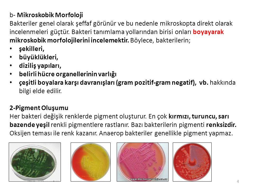 b- Mikroskobik Morfoloji