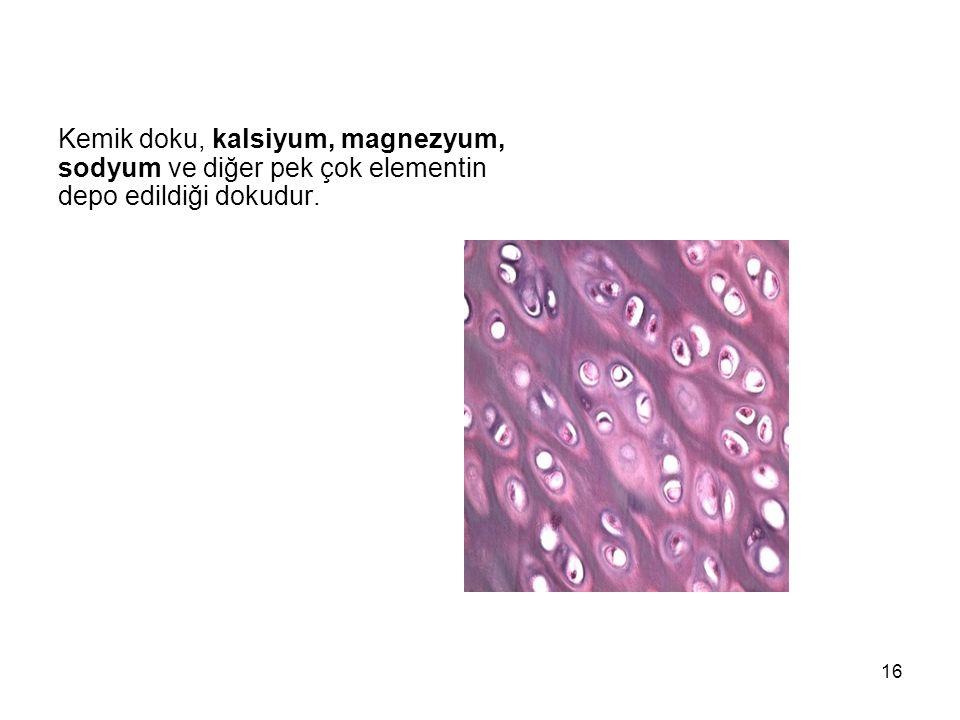 Kemik doku, kalsiyum, magnezyum, sodyum ve diğer pek çok elementin depo edildiği dokudur.