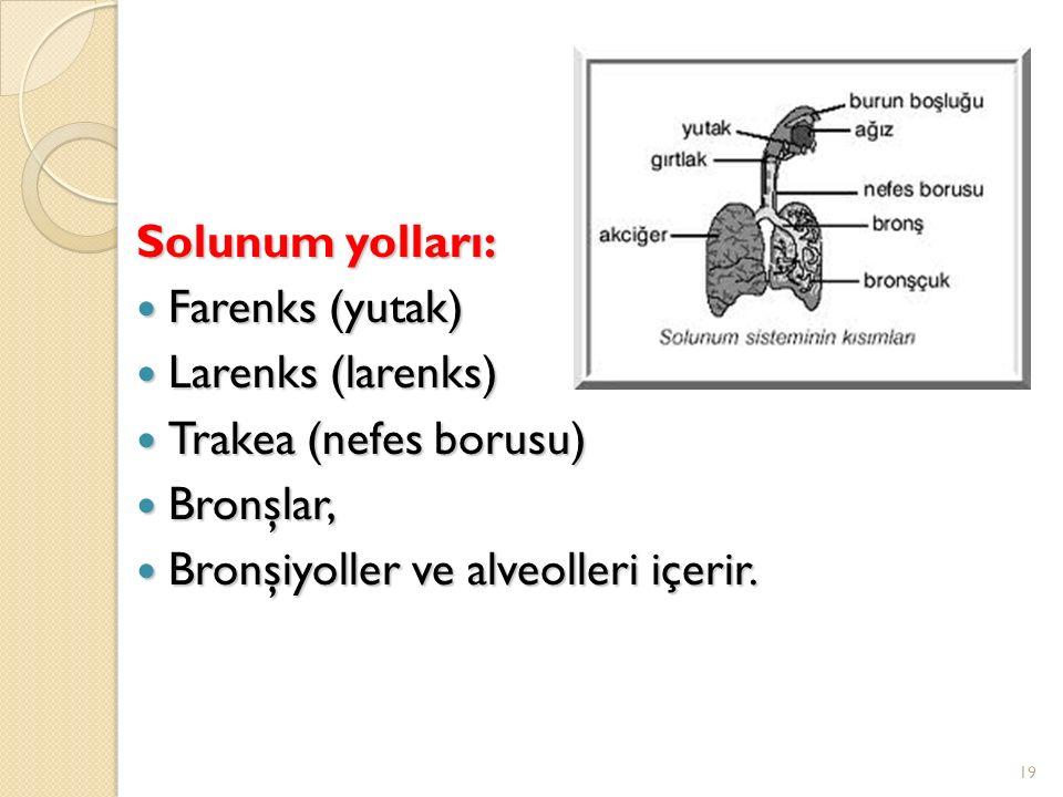 Solunum yolları: Farenks (yutak) Larenks (larenks) Trakea (nefes borusu) Bronşlar, Bronşiyoller ve alveolleri içerir.