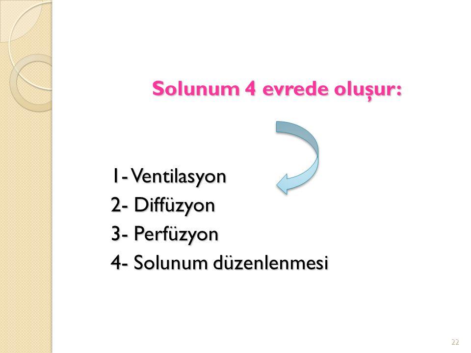 Solunum 4 evrede oluşur: 1- Ventilasyon 2- Diffüzyon 3- Perfüzyon 4- Solunum düzenlenmesi