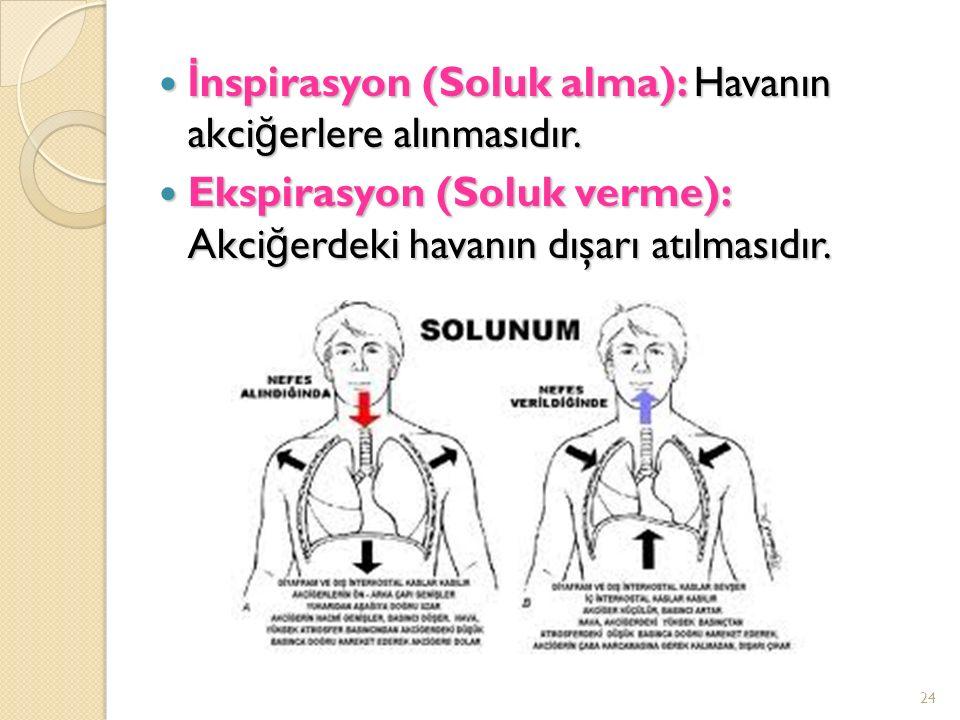 İnspirasyon (Soluk alma): Havanın akciğerlere alınmasıdır.