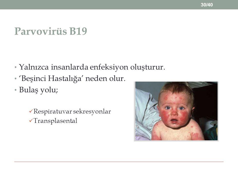 Parvovirüs B19 Yalnızca insanlarda enfeksiyon oluşturur.