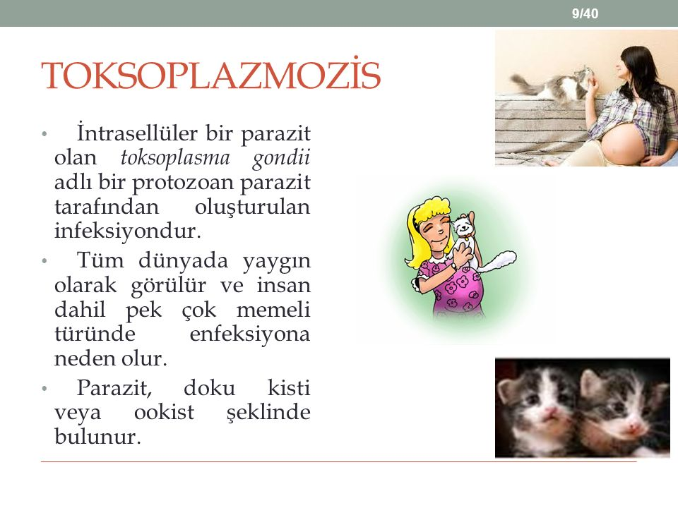 TOKSOPLAZMOZİS İntrasellüler bir parazit olan toksoplasma gondii adlı bir protozoan parazit tarafından oluşturulan infeksiyondur.