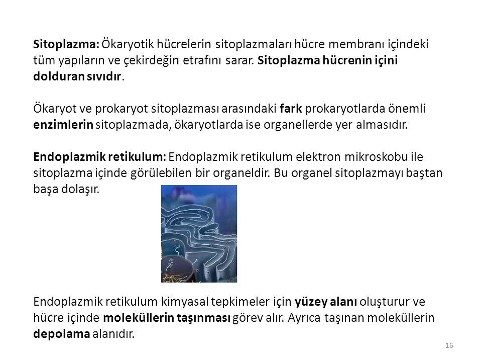 Sitoplazma: Ökaryotik hücrelerin sitoplazmaları hücre membranı içindeki tüm yapıların ve çekirdeğin etrafını sarar. Sitoplazma hücrenin içini dolduran sıvıdır.