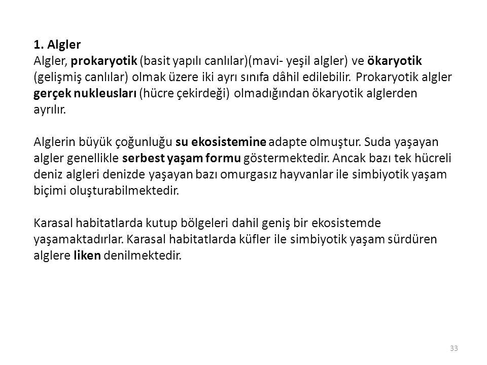 1. Algler