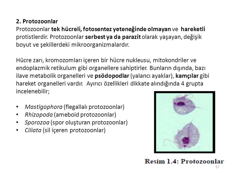 2. Protozoonlar