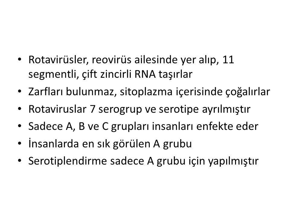 Rotavirüsler, reovirüs ailesinde yer alıp, 11 segmentli, çift zincirli RNA taşırlar