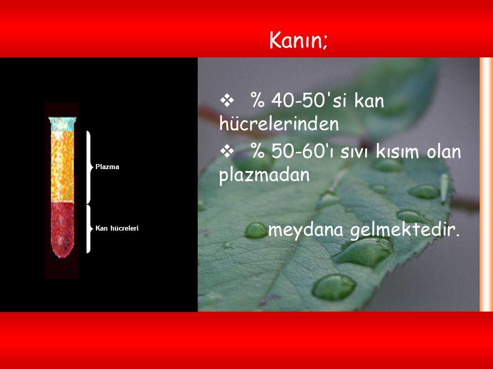 % 40-50 si kan hücrelerinden % 50-60'ı sıvı kısım olan plazmadan